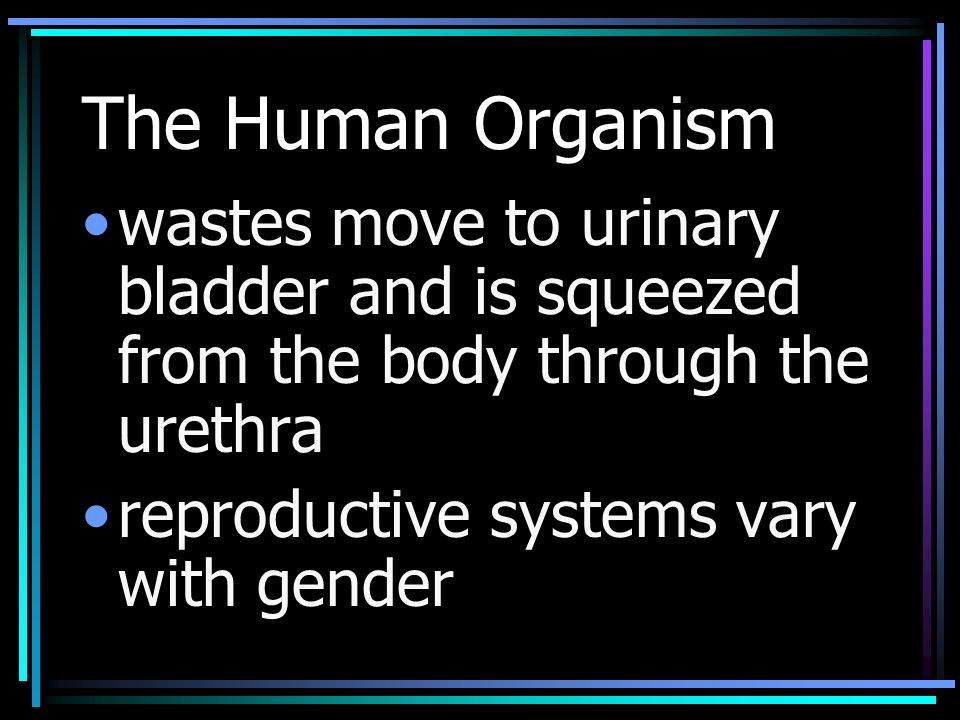 The Human Organism wastes move to urinary bladder and is squeezed from the body through the urethra reproductive systems vary with gender