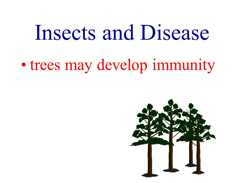 Insects and Disease trees may develop immunity