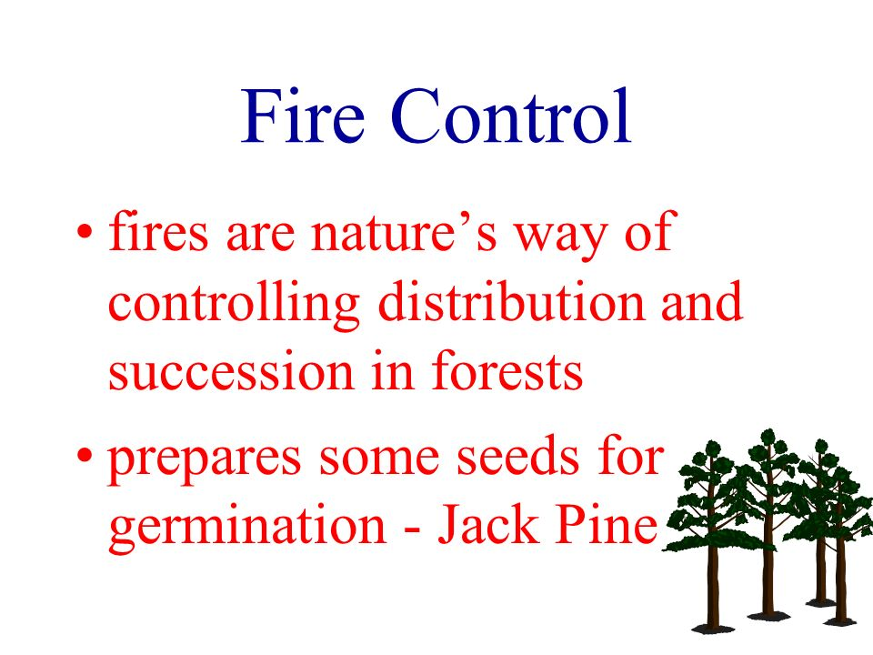 Fire Control fires are natures way of controlling distribution and succession in forests prepares some seeds for germination - Jack Pine
