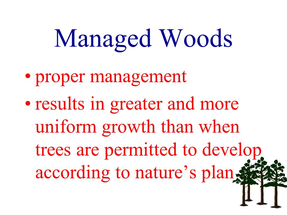 Managed Woods proper management results in greater and more uniform growth than when trees are permitted to develop according to natures plan