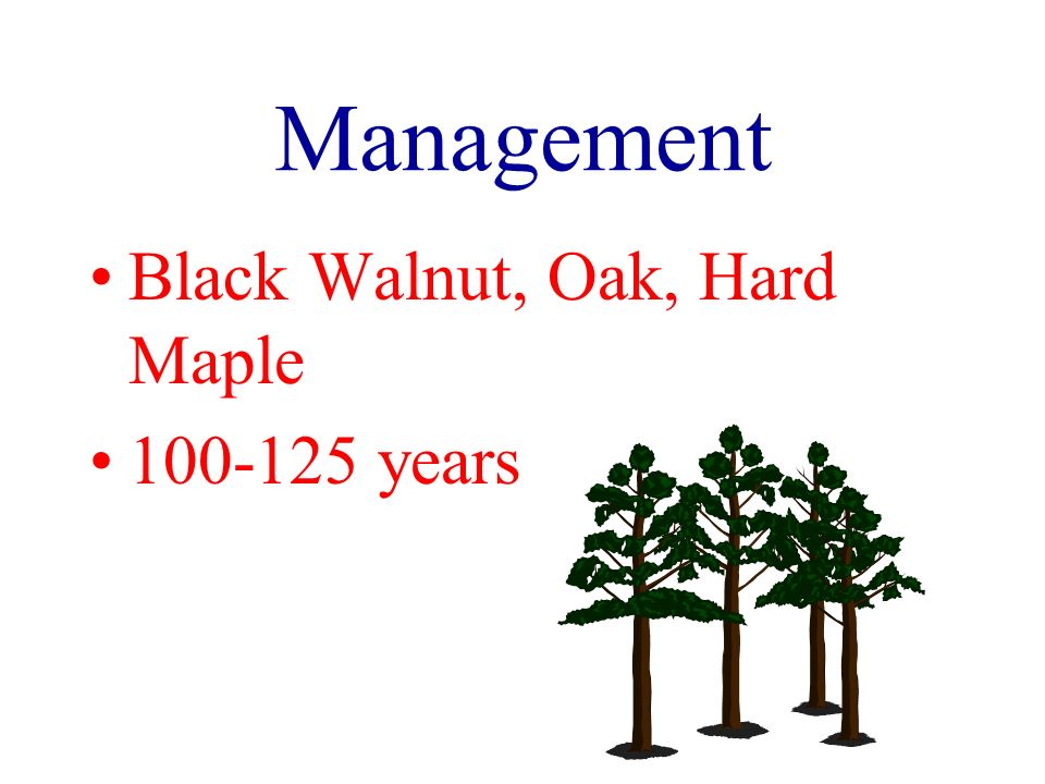 Management Black Walnut, Oak, Hard Maple 100-125 years