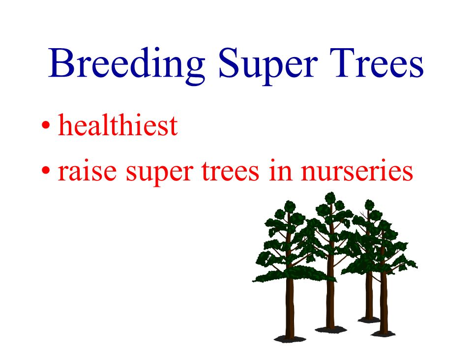 Breeding Super Trees healthiest raise super trees in nurseries