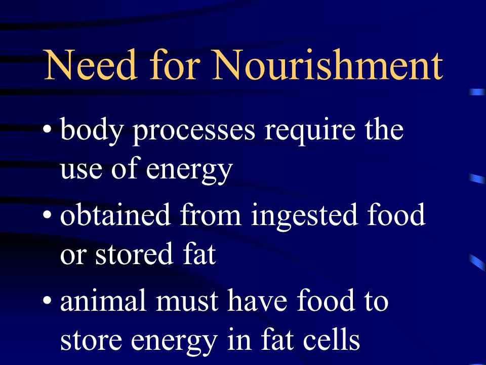 Need for Nourishment body processes require the use of energy obtained from ingested food or stored fat animal must have food to store energy in fat c