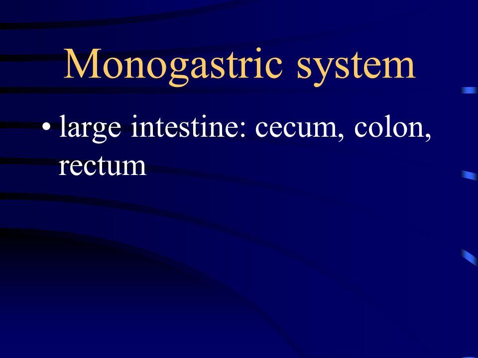 Monogastric system large intestine: cecum, colon, rectum