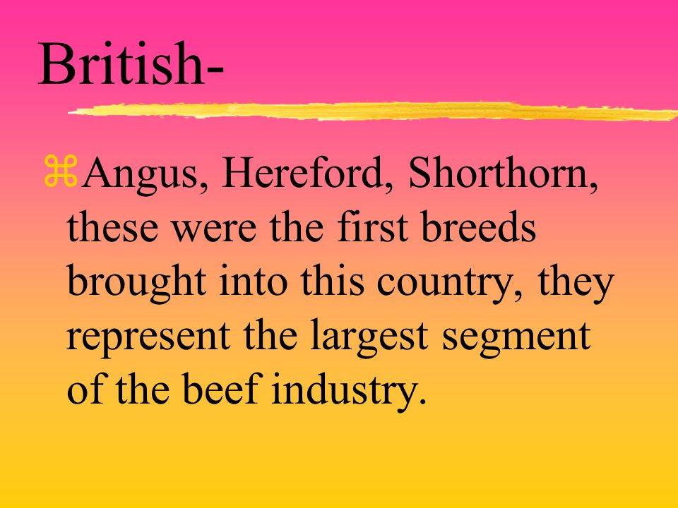 British- zAngus, Hereford, Shorthorn, these were the first breeds brought into this country, they represent the largest segment of the beef industry.