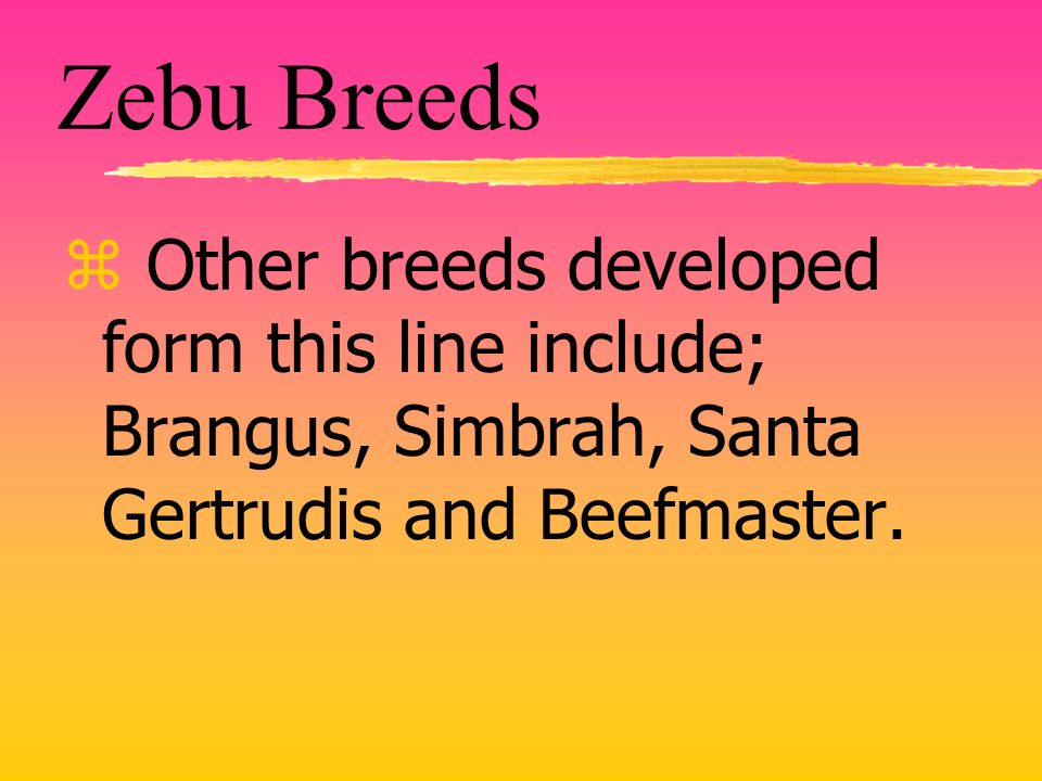 Zebu Breeds z Other breeds developed form this line include; Brangus, Simbrah, Santa Gertrudis and Beefmaster.