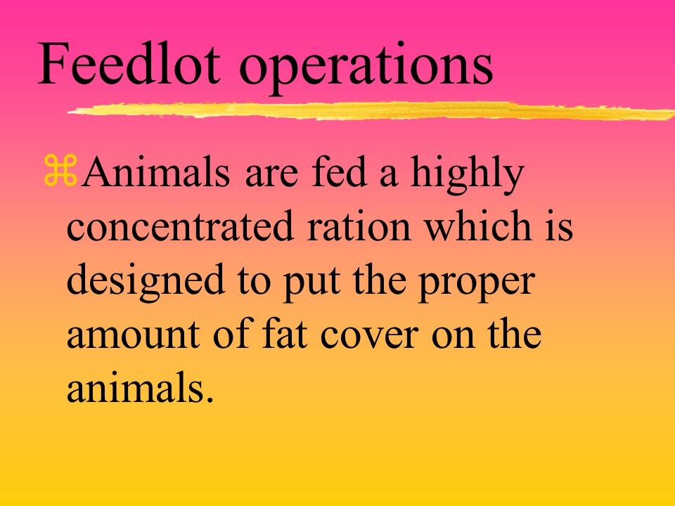 Feedlot operations zAnimals are fed a highly concentrated ration which is designed to put the proper amount of fat cover on the animals.