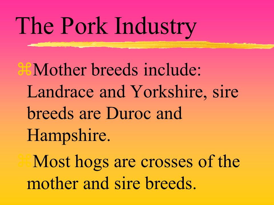 The Pork Industry zMother breeds include: Landrace and Yorkshire, sire breeds are Duroc and Hampshire. zMost hogs are crosses of the mother and sire b