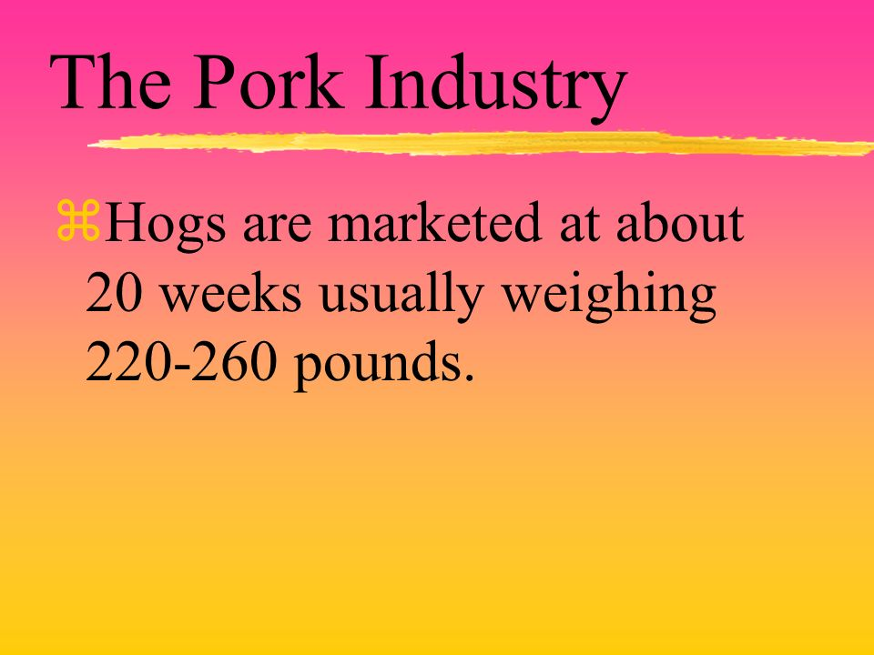 The Pork Industry zHogs are marketed at about 20 weeks usually weighing 220-260 pounds.