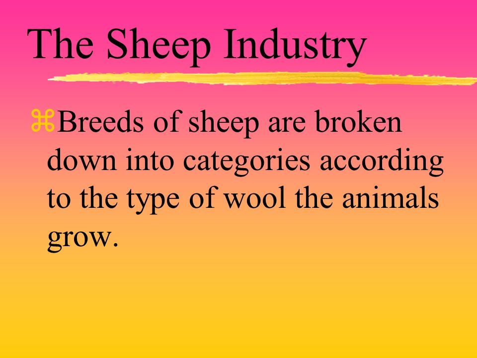 The Sheep Industry zBreeds of sheep are broken down into categories according to the type of wool the animals grow.