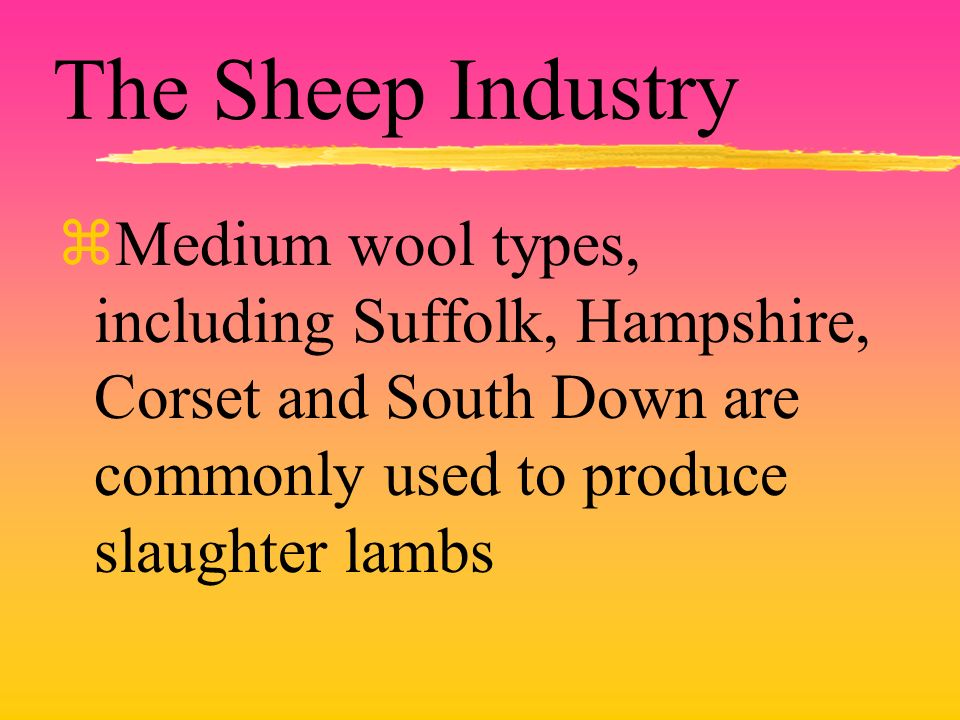 The Sheep Industry zMedium wool types, including Suffolk, Hampshire, Corset and South Down are commonly used to produce slaughter lambs