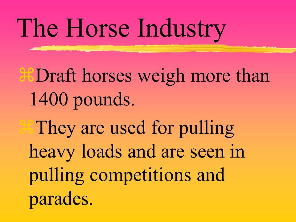 The Horse Industry zDraft horses weigh more than 1400 pounds.