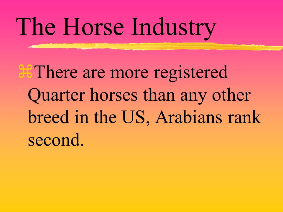 The Horse Industry zThere are more registered Quarter horses than any other breed in the US, Arabians rank second.