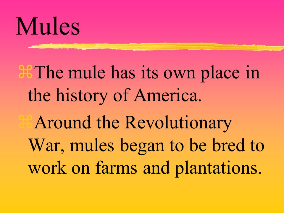 Mules zThe mule has its own place in the history of America. zAround the Revolutionary War, mules began to be bred to work on farms and plantations.