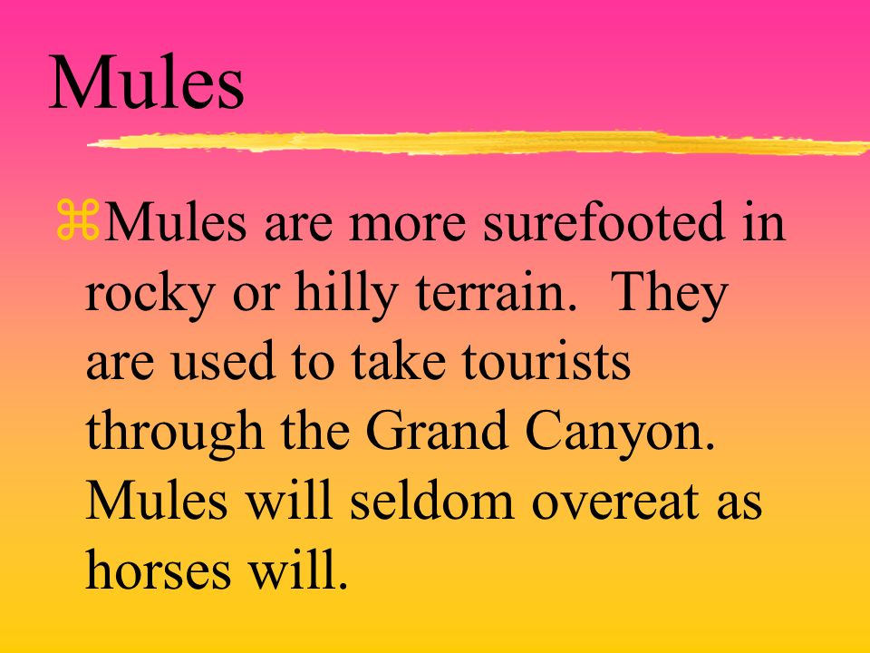 Mules zMules are more surefooted in rocky or hilly terrain. They are used to take tourists through the Grand Canyon. Mules will seldom overeat as hors