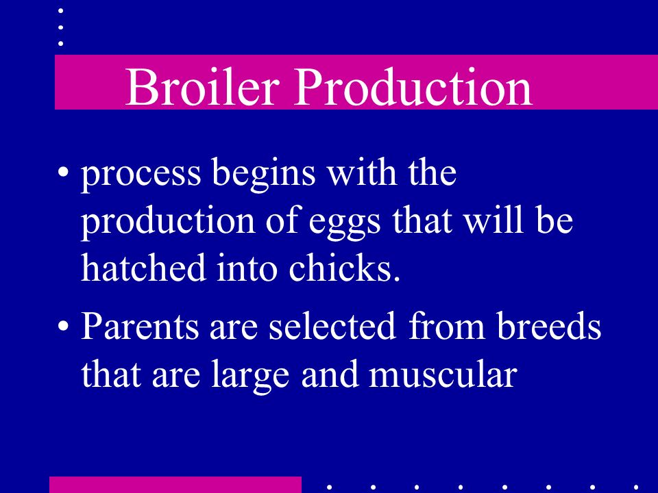 Broiler Production process begins with the production of eggs that will be hatched into chicks. Parents are selected from breeds that are large and mu