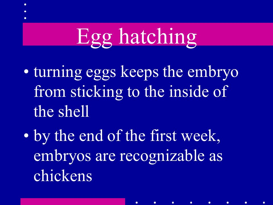 Egg hatching turning eggs keeps the embryo from sticking to the inside of the shell by the end of the first week, embryos are recognizable as chickens
