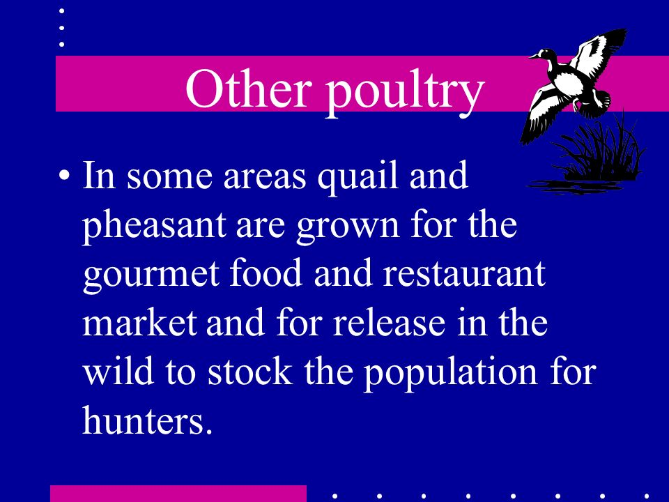 Other poultry In some areas quail and pheasant are grown for the gourmet food and restaurant market and for release in the wild to stock the populatio