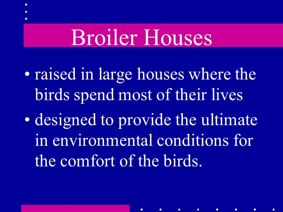 Broiler Houses raised in large houses where the birds spend most of their lives designed to provide the ultimate in environmental conditions for the c