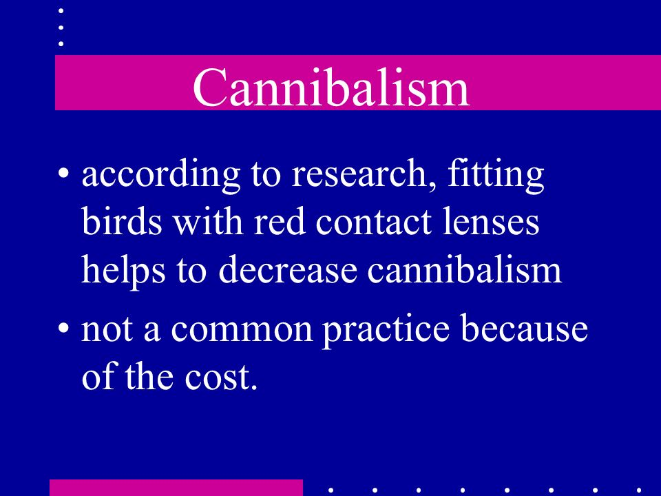 Cannibalism according to research, fitting birds with red contact lenses helps to decrease cannibalism not a common practice because of the cost.