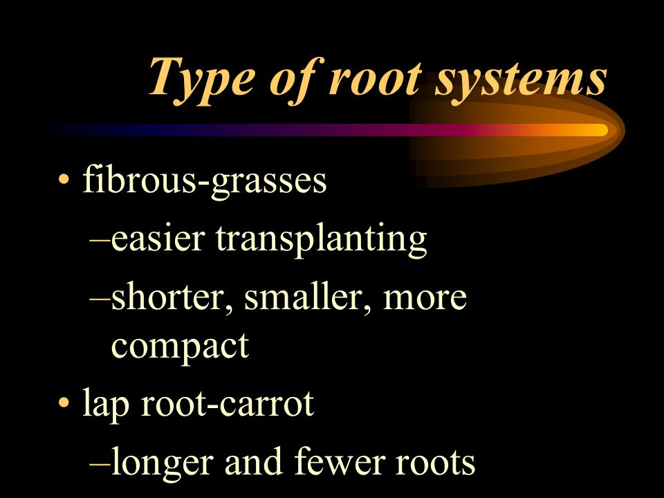 Functions other than water and mineral absorption cash crops for food –c–carrots –b–beets –r–radishes –s–sweet potatoes propagation