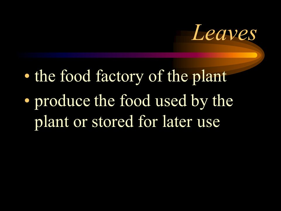 Parts of a plant Four basic parts –l–leaves –s–stems –r–roots –f–flowers
