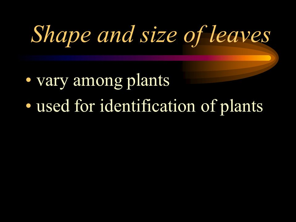 Leaves the food factory of the plant produce the food used by the plant or stored for later use