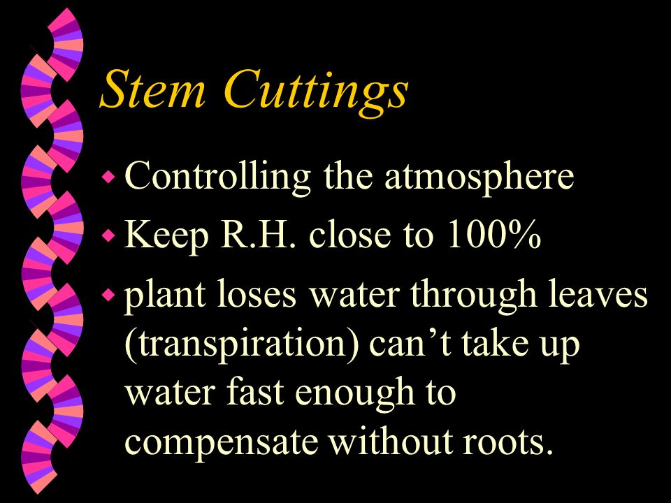 Stem Cuttings w Controlling the atmosphere w Keep R.H. close to 100% w plant loses water through leaves (transpiration) cant take up water fast enough