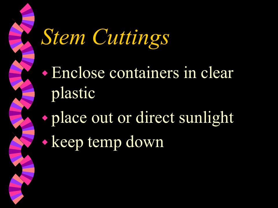 Stem Cuttings w Enclose containers in clear plastic w place out or direct sunlight w keep temp down