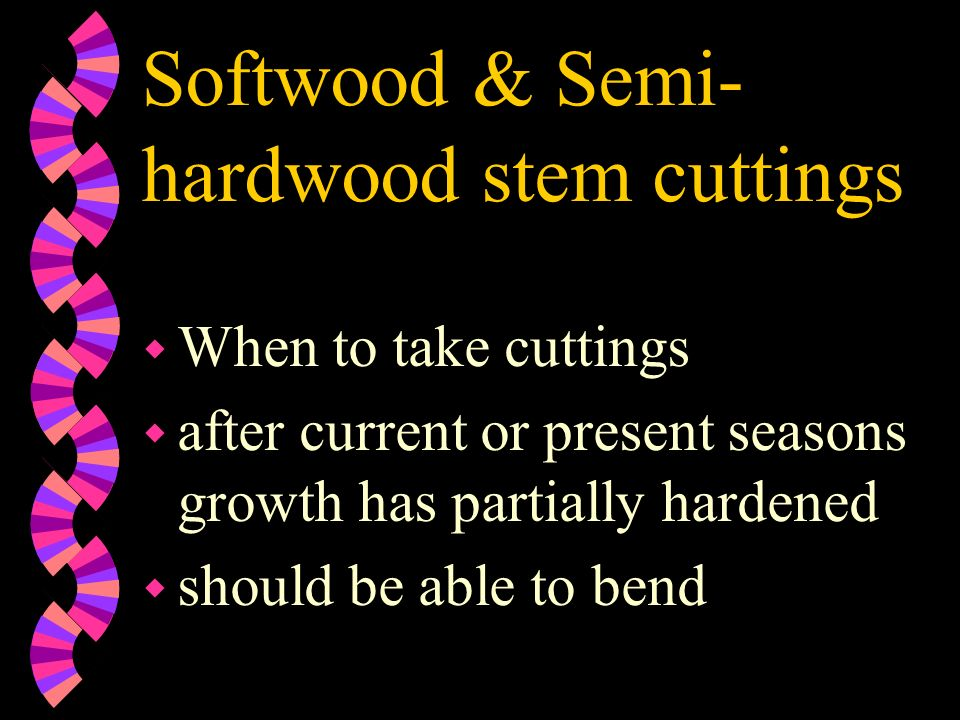 Softwood & Semi- hardwood stem cuttings w When to take cuttings w after current or present seasons growth has partially hardened w should be able to b