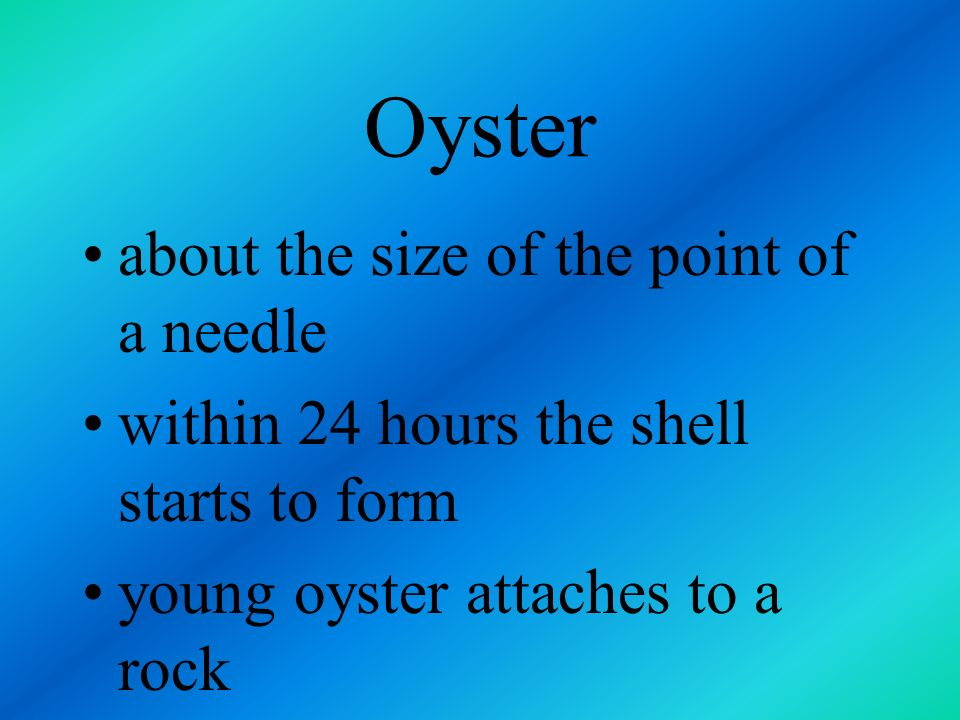 Oyster female oyster lays about 500 million eggs each year, spraying them into the water young oysters, called spat, hatches 10 hours later