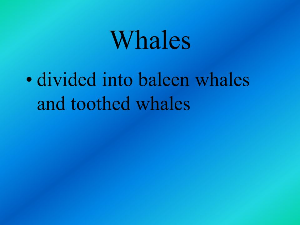 Whales include the largest mammals that have ever lived on the earth the largest blue whale was 100 feet long and weight 136 metric tons