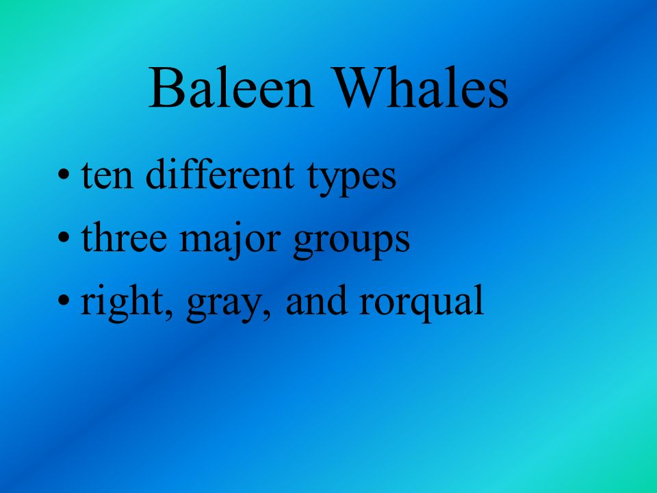 Baleen Whales obtain their food by straining plankton from the seawater through plates called whalebone