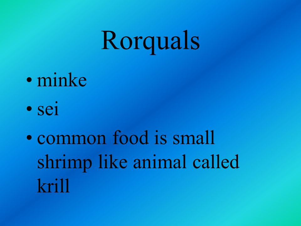 Rorquals most common include blue brydes fin humpback