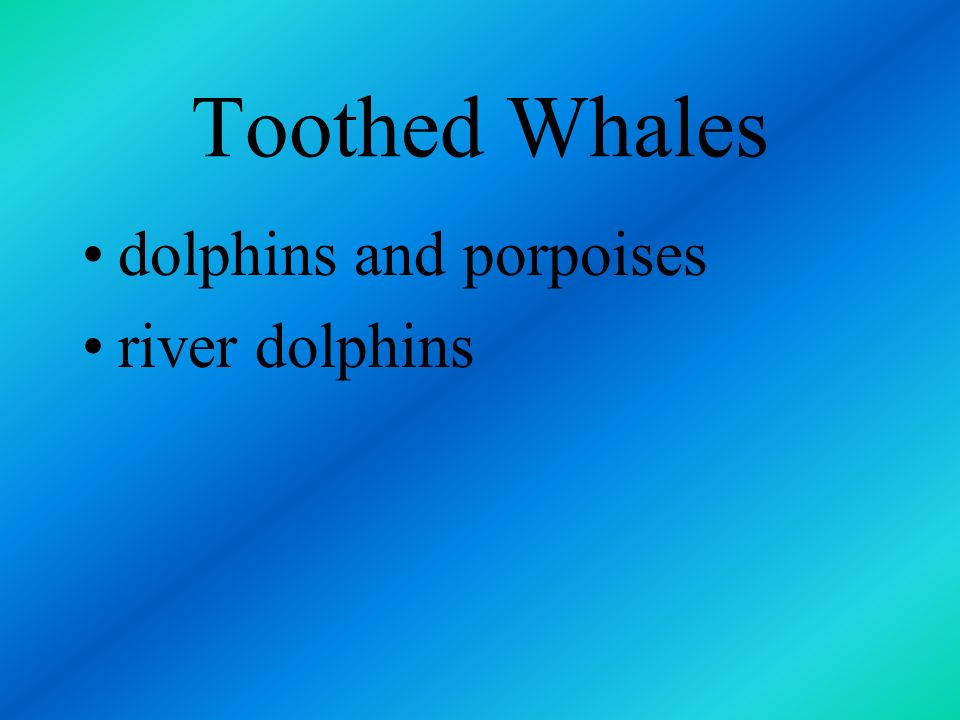 Toothed whales five major groups sperm beaked belugas and narwhales