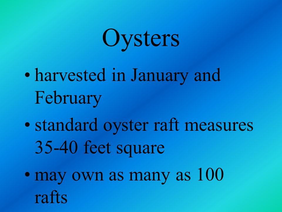 Oysters larvae are thinned to the correct amount midseason - October - wires are pulled and young oysters are cleaned and brushed which helps them gro