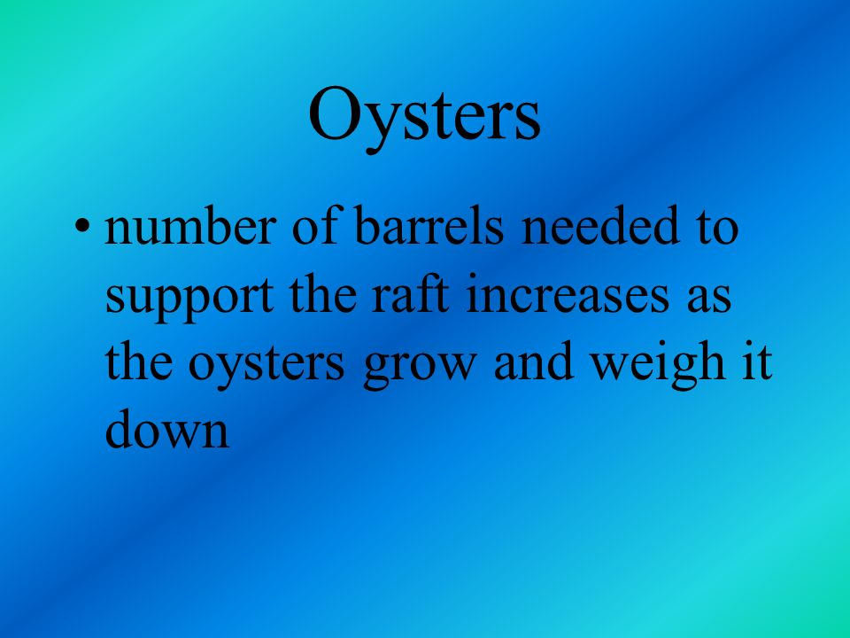 Oysters harvested in January and February standard oyster raft measures 35-40 feet square may own as many as 100 rafts