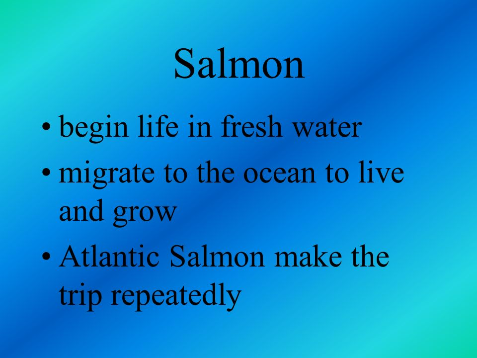 Salmon range in size from 16 inches long and weighing 5 pounds to 36 inches and 25 pounds live in both the Atlantic and Pacific Oceans