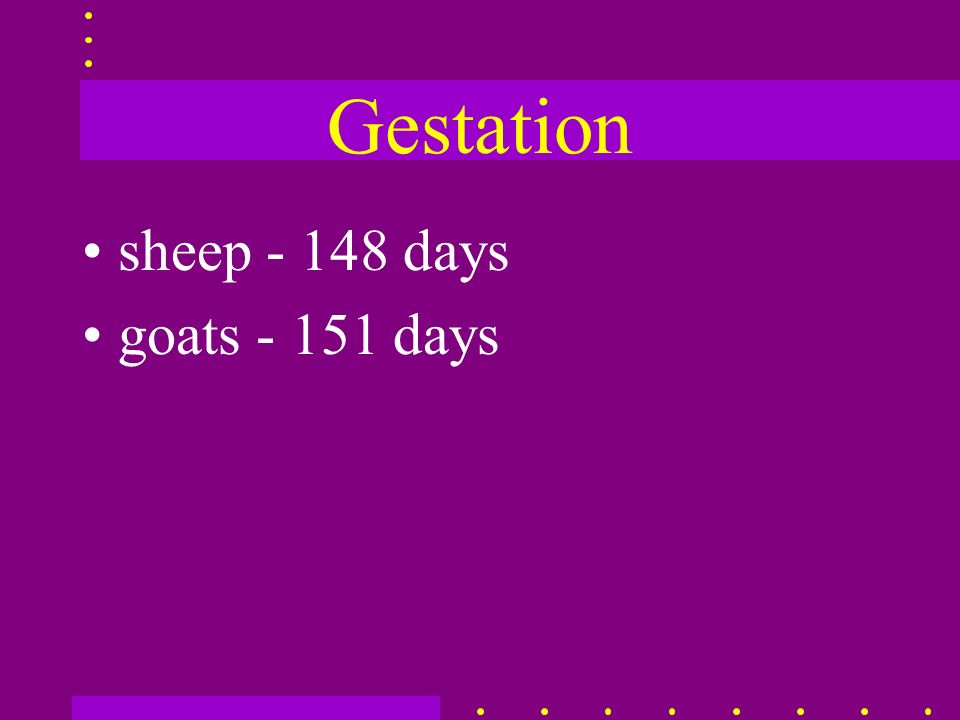 Gestation sheep - 148 days goats - 151 days