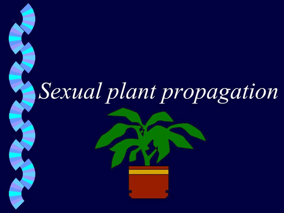 Sexual plant propagation
