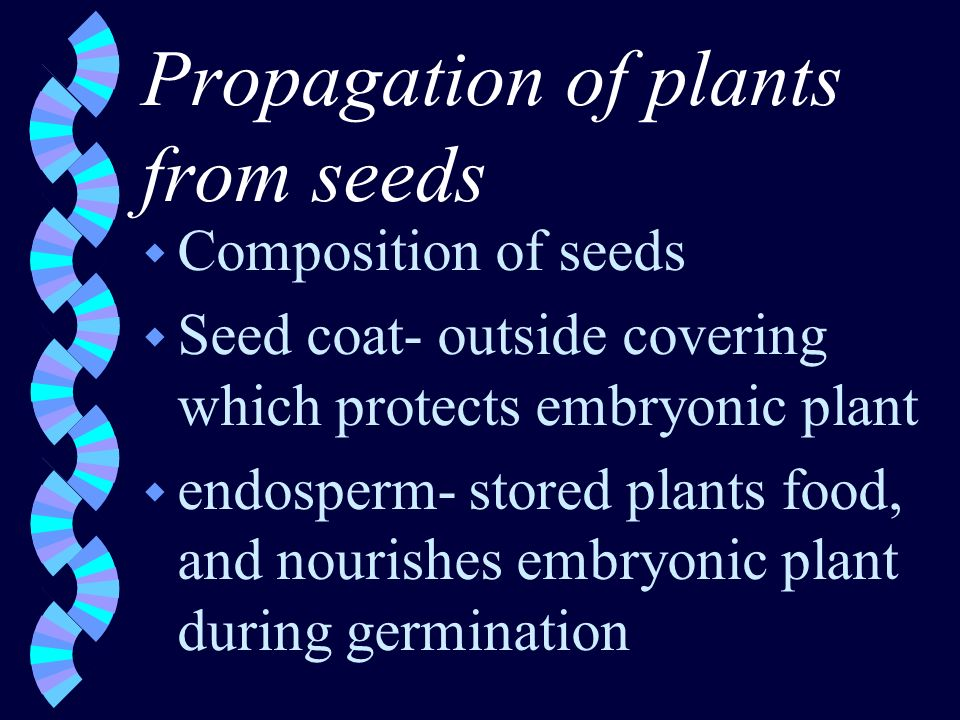 Propagation of plants from seeds w Composition of seeds w Seed coat- outside covering which protects embryonic plant w endosperm- stored plants food, and nourishes embryonic plant during germination