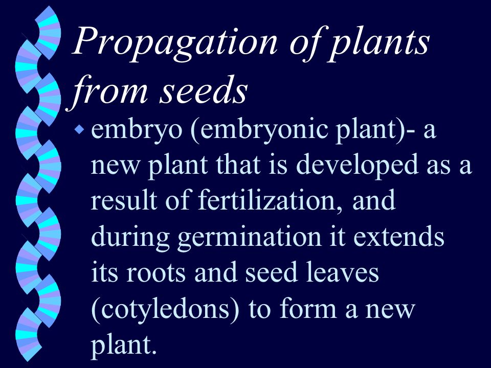 Propagation of plants from seeds w embryo (embryonic plant)- a new plant that is developed as a result of fertilization, and during germination it extends its roots and seed leaves (cotyledons) to form a new plant.