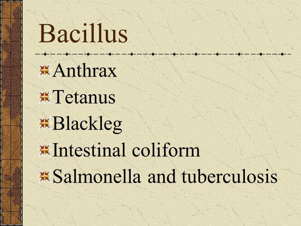 Bacillus Anthrax Tetanus Blackleg Intestinal coliform Salmonella and tuberculosis
