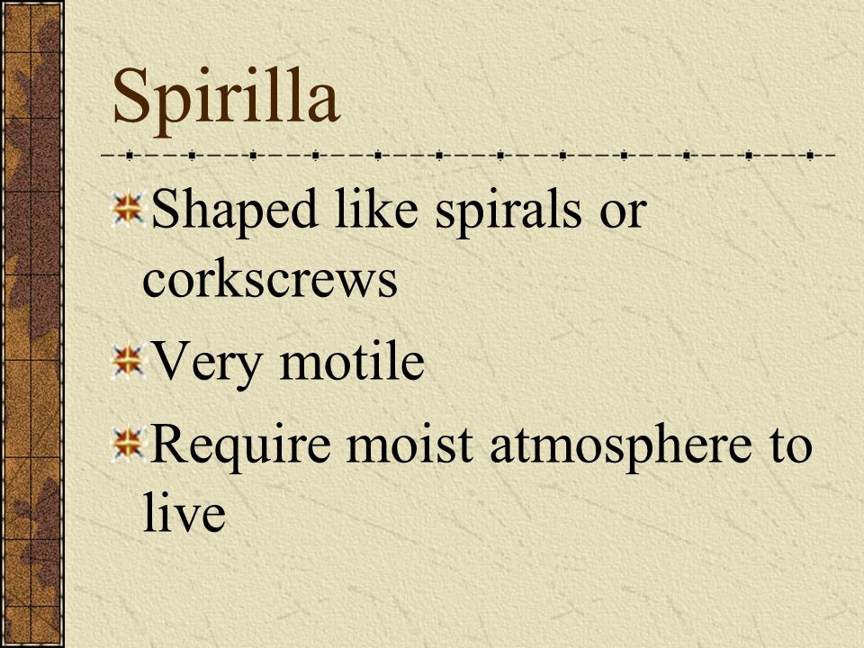 Spirilla Shaped like spirals or corkscrews Very motile Require moist atmosphere to live