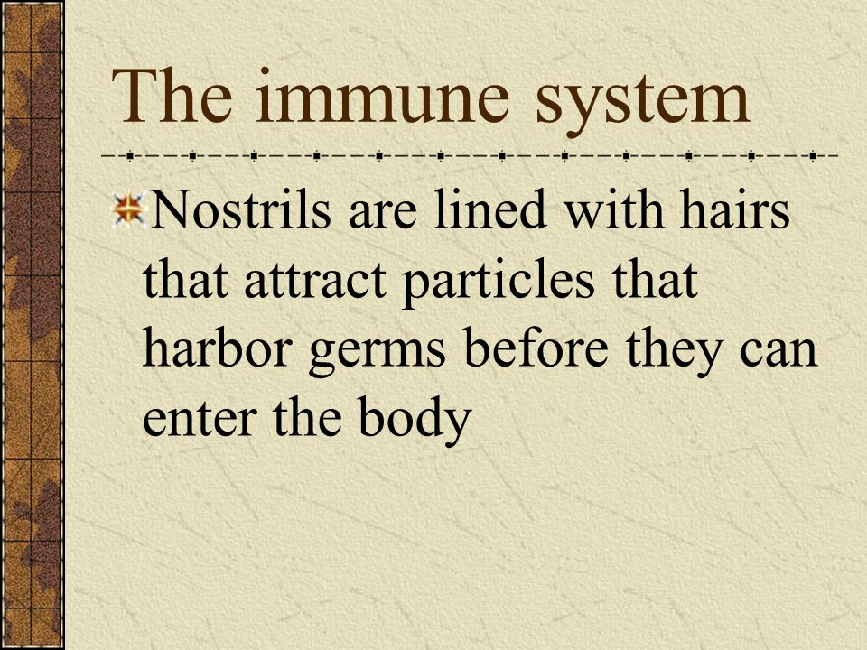 The immune system Nostrils are lined with hairs that attract particles that harbor germs before they can enter the body