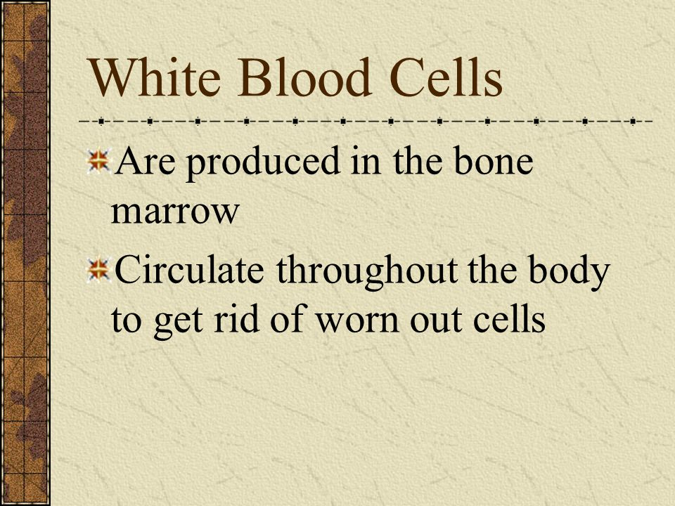 White Blood Cells Are produced in the bone marrow Circulate throughout the body to get rid of worn out cells