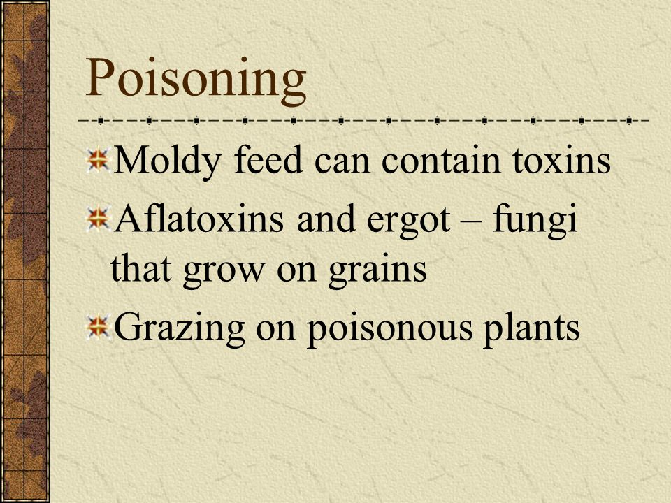 Poisoning Moldy feed can contain toxins Aflatoxins and ergot – fungi that grow on grains Grazing on poisonous plants