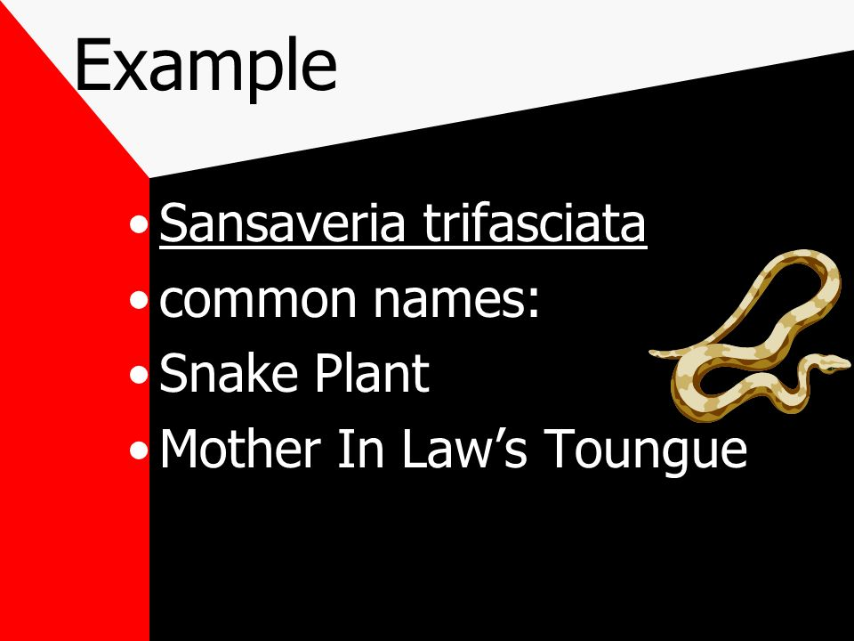 Why use Scientific names many plants have more than one common name universally understood throughout the world