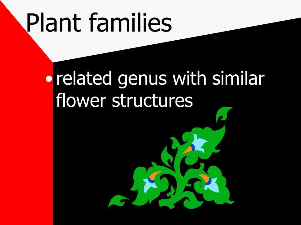 Example Sansaveria trifasciata common names: Snake Plant Mother In Laws Toungue