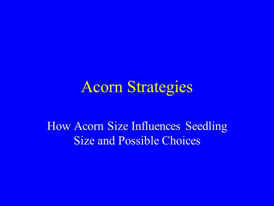 Acorns Sized by Round Hole Screens Four nurseries in Study –Wilson, JP : Red oak only –Valonia, Penn : Red and white oak Made as many sizes as possible with round hole screens All lots floated to remove poor seeds Planted by hand for precise placement Fall 2001
